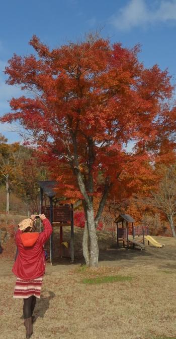 紅葉と雲、そしてもう一本の紅葉