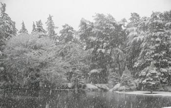池と雪囲い