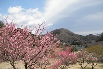静岡県伊東市 松川湖
