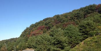 大学周辺の山(宮城県仙台市太白区八木山香澄町):残念ながら、紅葉はまだでした
