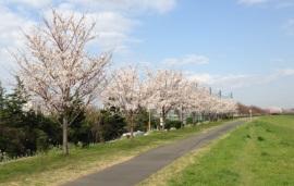 東京都立狛江高等学校付近